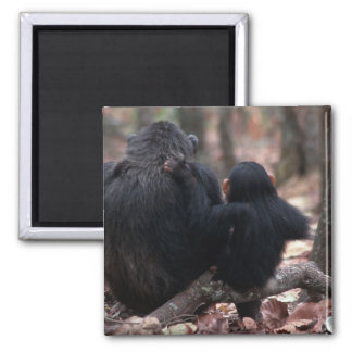 Africa, East Africa, Tanzania, Gombe National 2 Inch Square Magnet