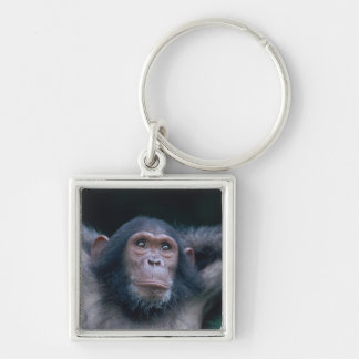 Africa, East Africa, Tanzania, Gombe National 2 Keychain