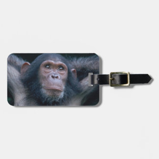 Africa, East Africa, Tanzania, Gombe National 2 Luggage Tag