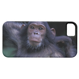 Africa, East Africa, Tanzania, Gombe National 3 iPhone 5 Covers