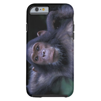 Africa, East Africa, Tanzania, Gombe National 3 Tough iPhone 6 Case