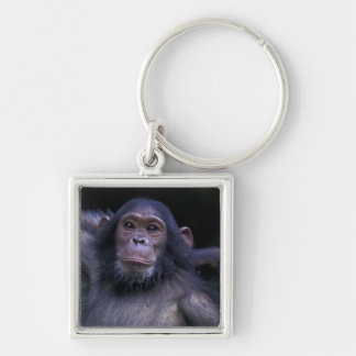 Africa, East Africa, Tanzania, Gombe National 3 Keychain