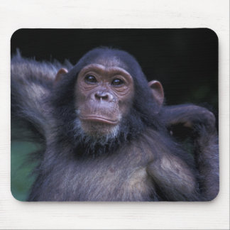 Africa, East Africa, Tanzania, Gombe National 3 Mouse Pad