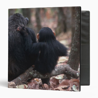 Africa, East Africa, Tanzania, Gombe National 3 Ring Binder