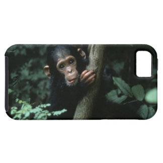 Africa, East Africa, Tanzania, Gombe National iPhone 5 Covers