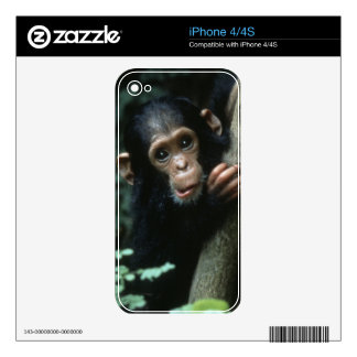 Africa, East Africa, Tanzania, Gombe National iPhone 4S Decal