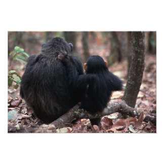 Africa, East Africa, Tanzania, Gombe National Photo Print