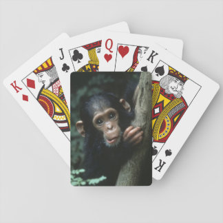 Africa, East Africa, Tanzania, Gombe National Playing Cards