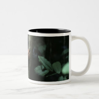 Africa, East Africa, Tanzania, Gombe National Two-Tone Coffee Mug