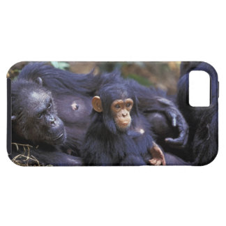 Africa, East Africa, Tanzania, Gombe NP Female iPhone 5 Covers
