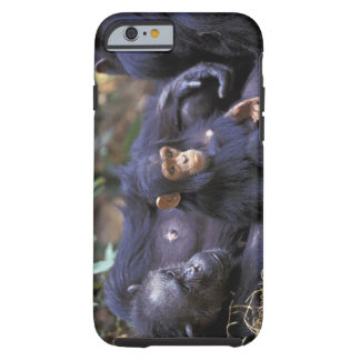 Africa, East Africa, Tanzania, Gombe NP Female Tough iPhone 6 Case