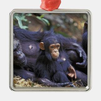 Africa, East Africa, Tanzania, Gombe NP Female Metal Ornament