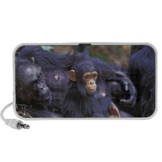 Africa, East Africa, Tanzania, Gombe NP Female Portable Speaker