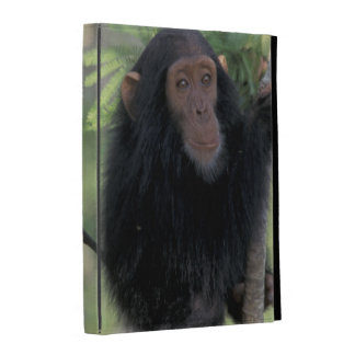 Africa, East Africa, Tanzania, Gombe NP Infant iPad Case