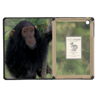 Africa, East Africa, Tanzania, Gombe NP Infant iPad Mini Cases