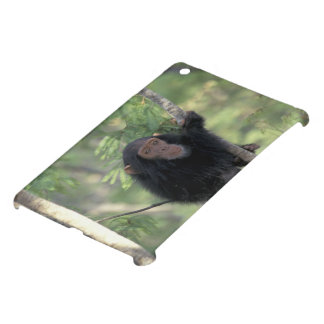 Africa, East Africa, Tanzania, Gombe NP Infant iPad Mini Cover