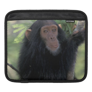 Africa, East Africa, Tanzania, Gombe NP Infant iPad Sleeves
