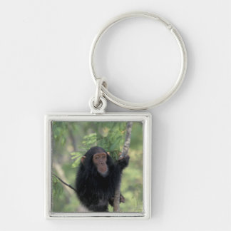 Africa, East Africa, Tanzania, Gombe NP Infant Keychain