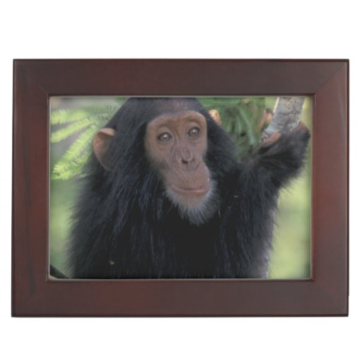 Africa, East Africa, Tanzania, Gombe NP Infant Memory Boxes