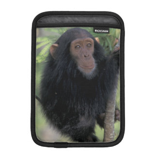 Africa, East Africa, Tanzania, Gombe NP Infant Sleeve For iPad Mini
