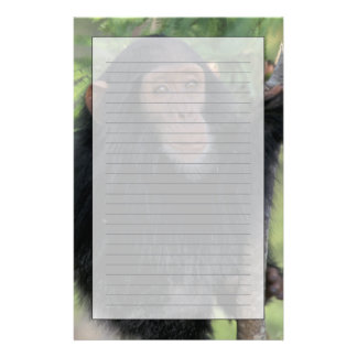 Africa, East Africa, Tanzania, Gombe NP Infant Stationery