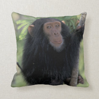 Africa, East Africa, Tanzania, Gombe NP Infant Throw Pillow