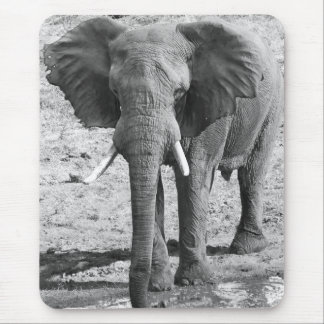 africa elephant black and white mouse pad