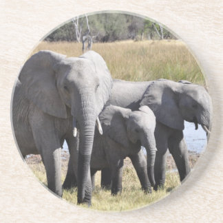 Africa Elephant Herds Beverage Coasters