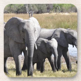 Africa Elephant Herds Drink Coasters