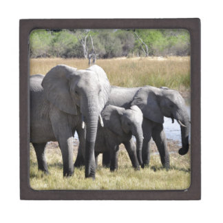 Africa Elephant Herds Keepsake Box