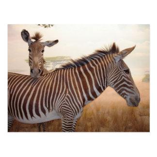 África - foto - cebra tarjeta postal