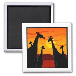 Africa-Giraffes 2 Inch Square Magnet