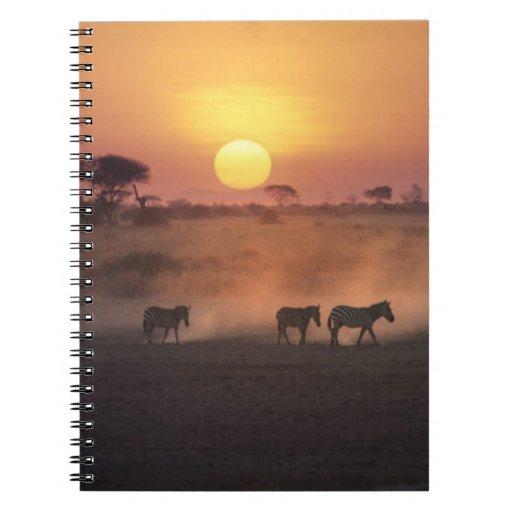 África, Kenia, Amboseli NP. Paseo de la cebra a Libro De Apuntes Con Espiral