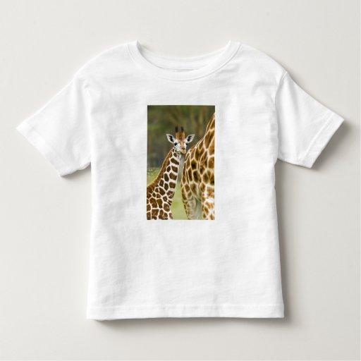 África. Kenia. Bebé de la jirafa de Rothschild con Playera De Bebé