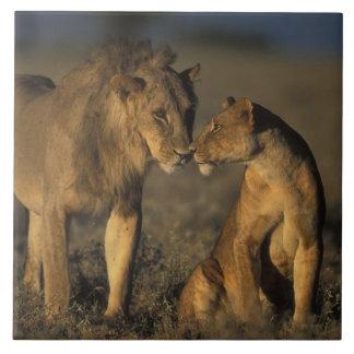 África, Kenia, búfalo salta reserva nacional, Tejas