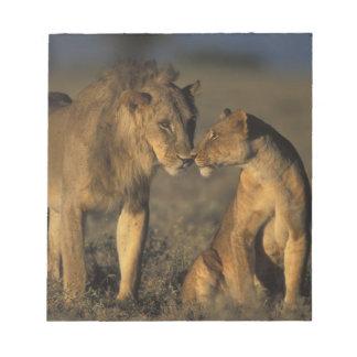 África, Kenia, búfalo salta reserva nacional, Blocs De Papel