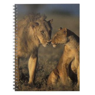 África, Kenia, búfalo salta reserva nacional, Libro De Apuntes