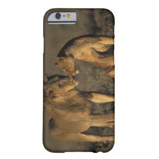 África, Kenia, búfalo salta reserva nacional, Funda De iPhone 6 Barely There