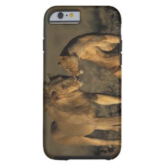 África, Kenia, búfalo salta reserva nacional, Funda De iPhone 6 Tough