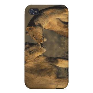 África, Kenia, búfalo salta reserva nacional, iPhone 4/4S Funda