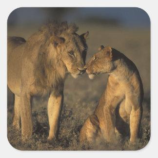 África, Kenia, búfalo salta reserva nacional, Pegatina Cuadrada