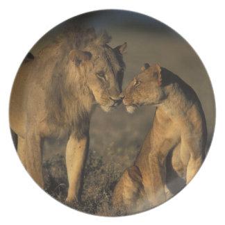 África, Kenia, búfalo salta reserva nacional, Platos De Comidas