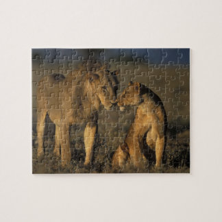 África, Kenia, búfalo salta reserva nacional, Puzzle