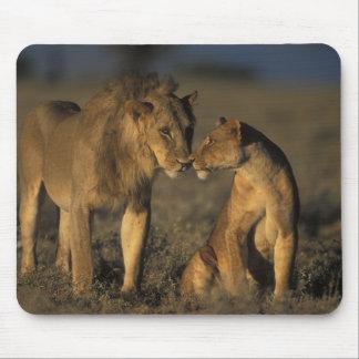 África, Kenia, búfalo salta reserva nacional, Alfombrilla De Ratón