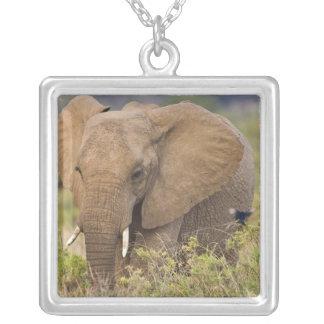 África Kenia Elefante en Samburu NP Joyerías