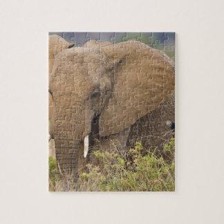 África. Kenia. Elefante en Samburu NP Rompecabezas