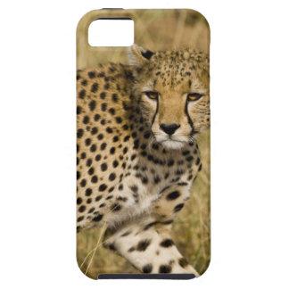 África. Kenia. Guepardo en Samburu NP. 3 iPhone 5 Carcasas