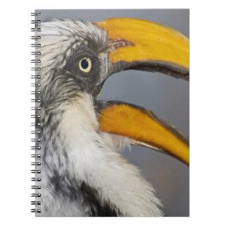 África. Kenia. Hornbill Amarillo-cargado en cuenta Spiral Notebooks