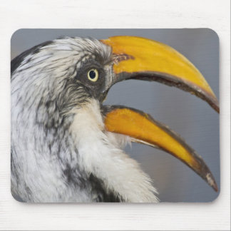 África. Kenia. Hornbill Amarillo-cargado en cuenta Tapete De Ratones