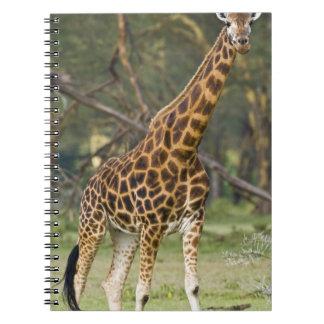 África. Kenia. La jirafa de Rothschild en el lago  Libreta